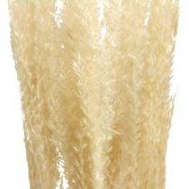 Hierba deco seca decorativa natural hierba ornamental seca 6 tallos