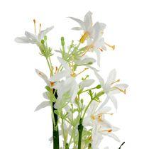 Arbusto de hierba con flores verde, blanco 3 piezas