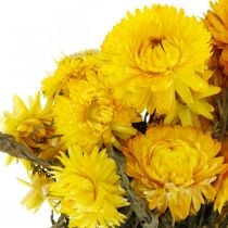Flor de paja amarilla seca flores secas decoración ramo 75g