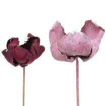 Flor de madera, mezcla de copa de palma rosa-brezo 25ud