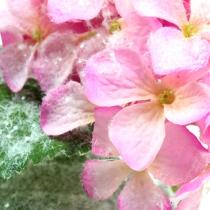 Hortensia rosa con efecto nieve 25cm