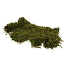 Bosque de musgo indio musgo verde naturaleza 2 kg