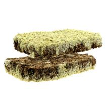 Moss Iceland Moss Finnish Prima Plus 2 platos