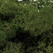 Musgo de reno para decoración Musgo verde 400g