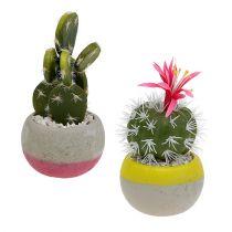 Cactus en maceta Mix H13cm 4pcs