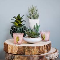 Cactus en maceta Ø12cm 1pc