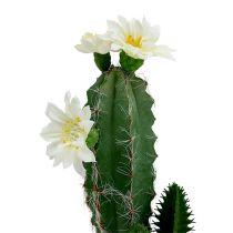 Cactus en maceta con flor 21cm blanco
