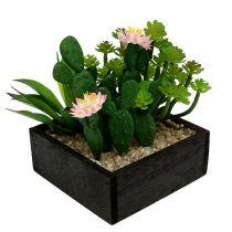 Cactus con flor 14cm en caja de madera