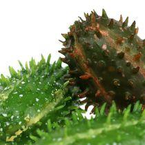 Nopal 5cm verde-marrón 6pcs