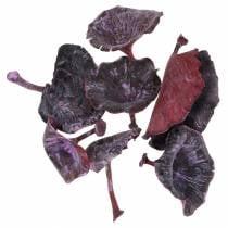 Kalix hongo lila, blanqueado 100 piezas