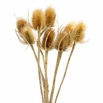 Flores secas cardo naturaleza 8pcs