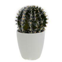 Cactus en maceta verde 14cm