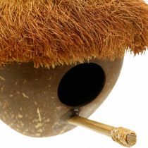 Coco como caja nido, pajarera para colgar, decoración de coco Ø16cm L46cm