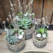 Jardinera ovalada de cesta tejida natural, gris 29 / 24cm, juego de 2