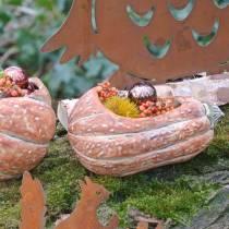 Calabaza para plantar Naranja 28 × 15 × 14cm