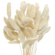 Lagurus hierba seca de cola de conejo blanqueada 40-50cm 50pcs