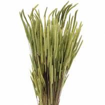 Hierba timothy natural 50-60cm 100g