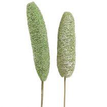 Luffa grande en un palo verde 25pcs