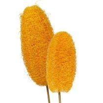 Luffa grande en palo amarillo dorado 25uds