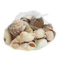 Mezcla de concha de decoración marítima natural 400g