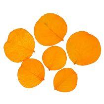 Monetablätter amarillo dorado 50g