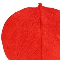 Moneta hojas rojas 50g