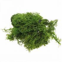 Musgo decorativo para manualidades musgo natural verde oscuro preservado 40g