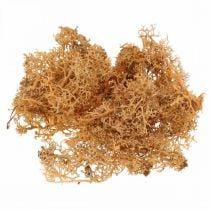 Musgo decorativo para manualidades Musgo natural de color naranja preservado 40g