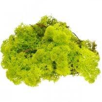 Material de artesanía preservado musgo verde claro musgo de reno 400g