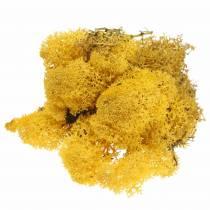Musgo reno musgo amarillo 400g