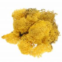 Moss reno musgo amarillo 500g