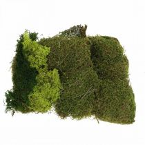 Musgo decorativo para manualidades mix verde, verde claro musgo natural 100g
