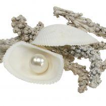 Shell mezcla con perla y madera blanco 200g