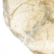Decoración de playa, conchas de Capiz 5–10cm, artículos naturales, nácar, marítimo 1kg