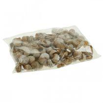 Decoración de caracol conchas de caracol naturaleza caracol de tierra vacío 200g