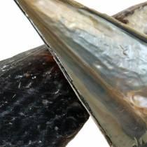 Conchas Negras 24 - 30cm 1kg
