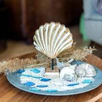 Concha con base de madera blanca, natural 20 × 14cm Decoración marítima para el salón