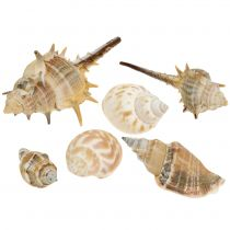 Shell mix natural surtido 260g