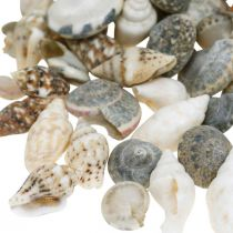 Deco concha de caracol mini naturaleza mix decoración marítima 1kg