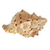 Shell surtido naturaleza 500g