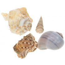Shell mezcla natural 500g