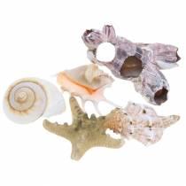 Mezcla de conchas naturales surtidas 5 piezas