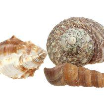 Shell mix para decoración marítima naturaleza 400g