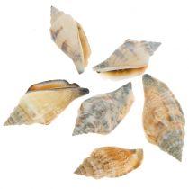 Mezcla de conchas natural 3cm - 5cm 200g