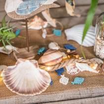 Decoración de conchas vieiras naturales 11-13cm 8pcs