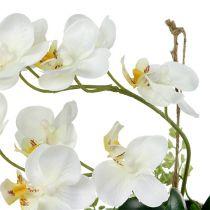Orquídea Phalaenopsis para colgar H26cm crema