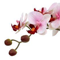 Orquídea rosa en maceta de cerámica 31cm