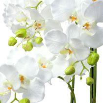 Orquídea blanca con globo 110cm