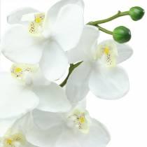Orquídea Blanca 77cm