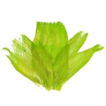 Palma fibra verde claro pastel 400gr